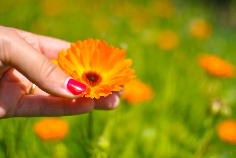 Jardin Essences Naturelles Corses Fleur Orange